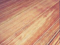 縁甲板・腰張板・床板3